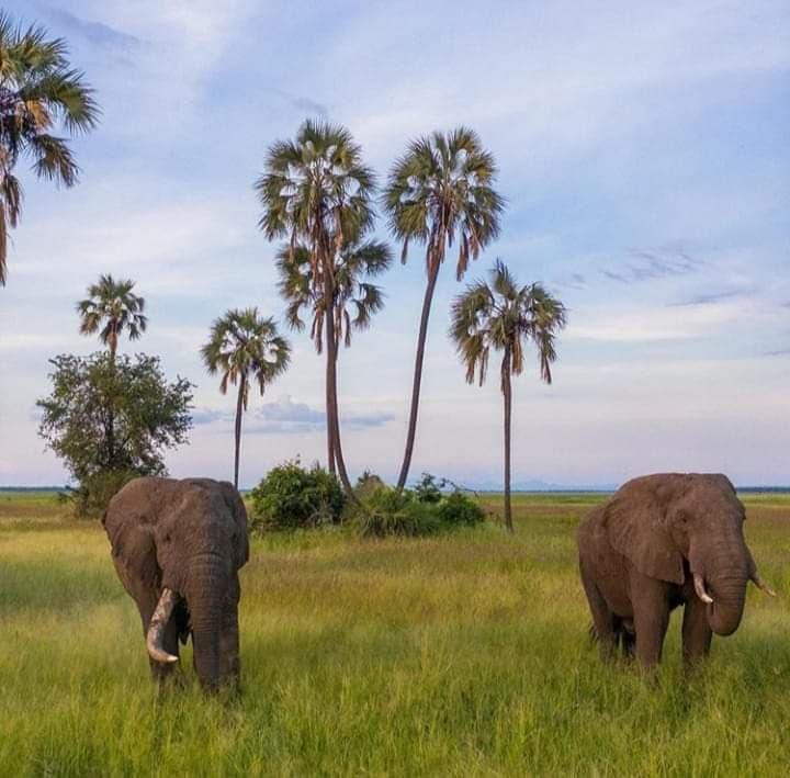 Malavi: Divljina koja ostavlja bez daha