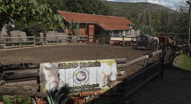 """Udruženje Zoo planet """"pet terapijom"""" pomaže mališanima sa zdravstvenim problemima"""