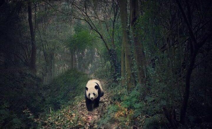 Kina: Zemlja pandi, čuda prirode i arhitekture
