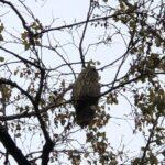 Udruženje Ruralni centar sova: Ptice treba bezbedno da lete