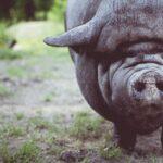 Kritika totalitarnosti Džordža Orvela: Kada prase uzme vlast