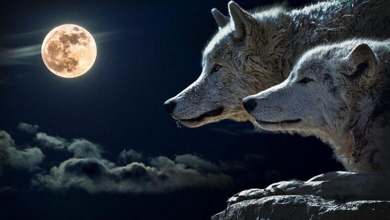 """""""Vučji Mesec"""" večeras po prvi put u ovoj godini"""