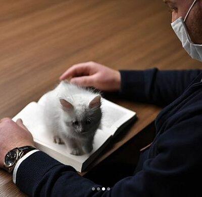 Dok knjigu čitam, mačku mazim